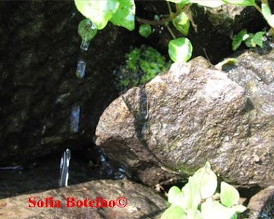 Foto enviada por Sofia Botelho. Local: Escudo, Cumieira .