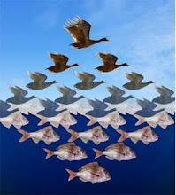 Variaciones peces-pájaros