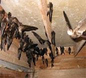 A Flock Of Birds In a House.