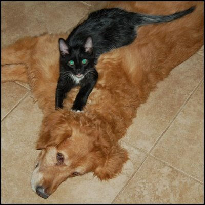 black cat and dog