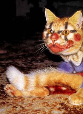 cat picture