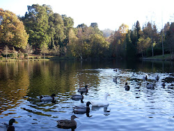 Lago Castiñeiras - Vilaboa (Pontevedra).