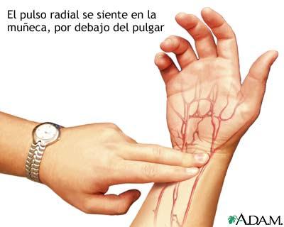 PERSONAL TRAINERS AMX: Modo de tomar el pulso en la arteria radial