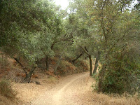 Meadow Vista Trail