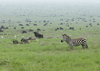 serengeti national park migration one of the top ten travel wonders of Africa