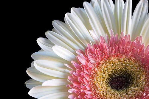 florist wilmington nc  bloomers flowers blog  wilmington nc, Natural flower