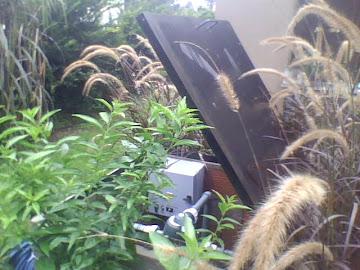 Casilla, ya con las plantas.. Loma Verde.