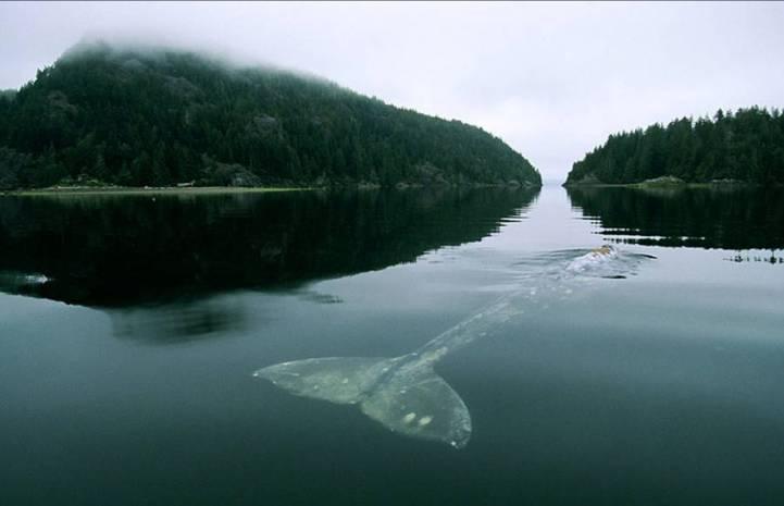 El animal más grande del mundo es un gusano marino: Lineus