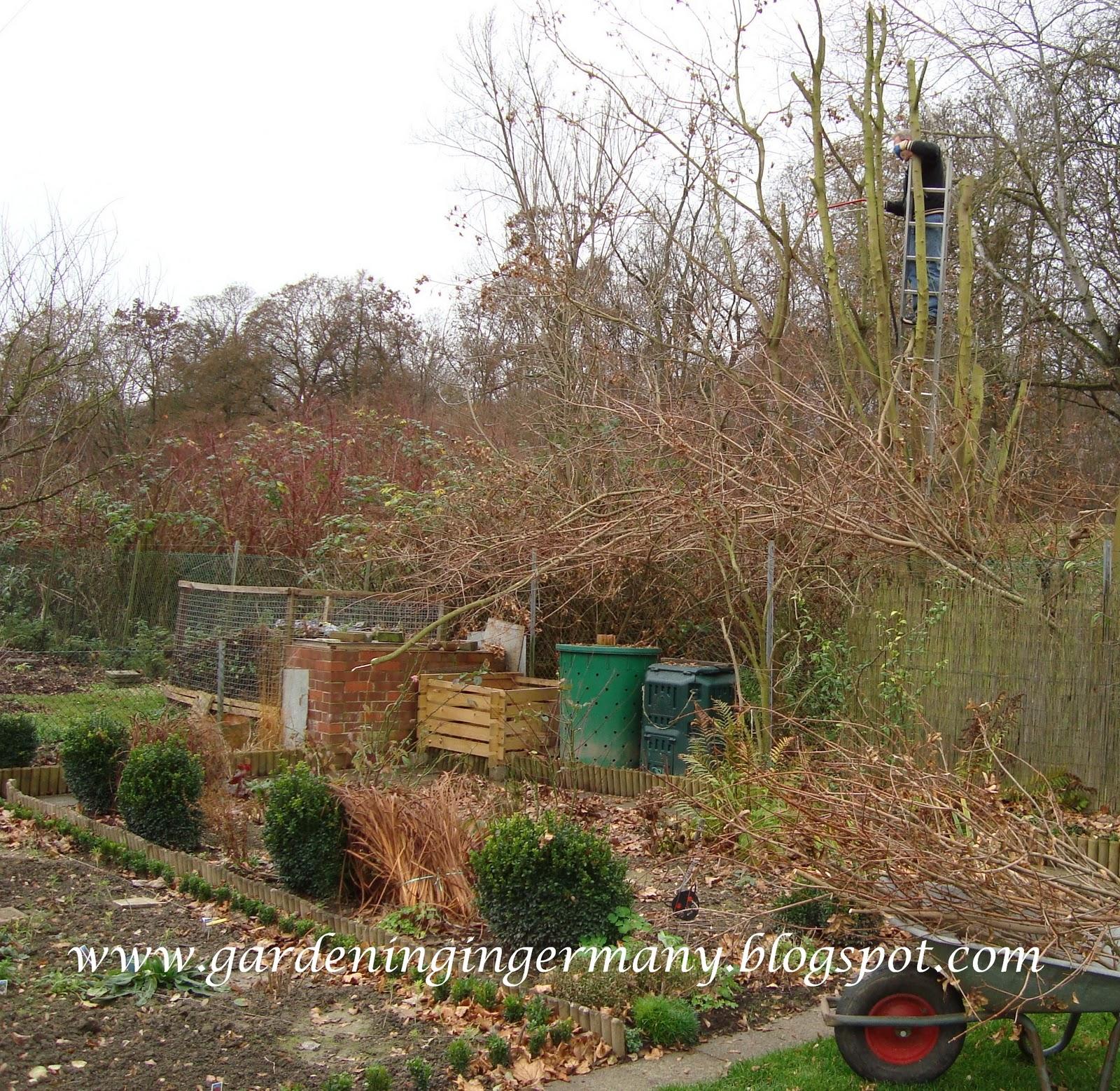 Gardening in Mannheim, Germany: December 2010