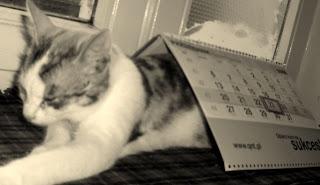 Kalendarz, siostrzane uczucia i solarium
