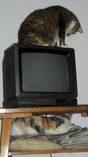 Zabawne koteczki