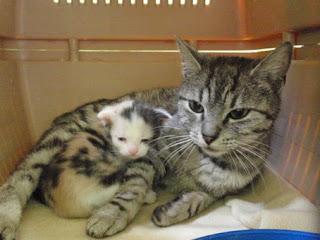Eliza i jej dzieciątko szukają domu...