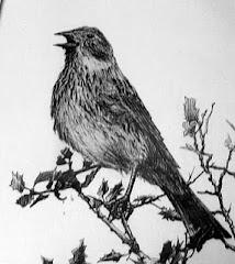 """Trabajo """" pájaro cantor"""""""