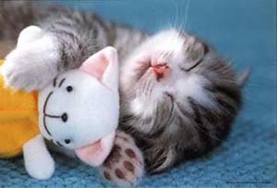 kitten-cuddle.jpg