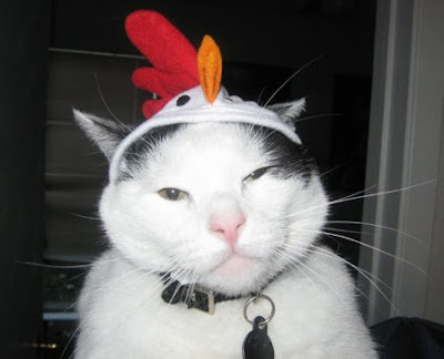 cat-with-hats-13.jpg