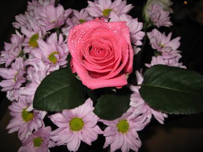 rose wallpaper hd. rose wallpaper hd. rose