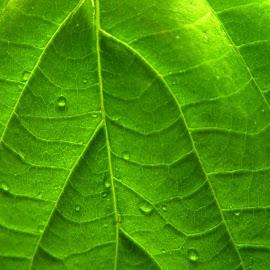 Gambar-gambar daun sangat indah
