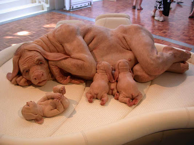 Human dog hybrid