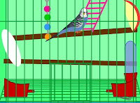 Budgie Escape walkthrough