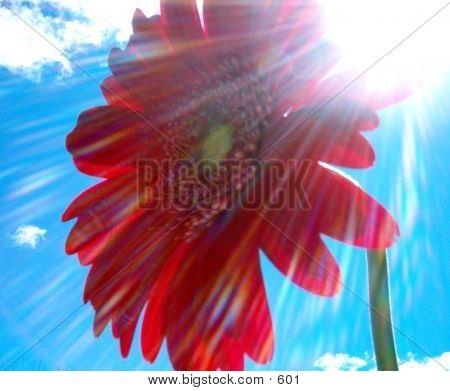 Untukmu Sinaran Hati. sinaran matahari yang