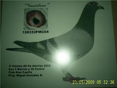 """Vanidosa"" tercer lugar paloma AS ruta adultas 2006."