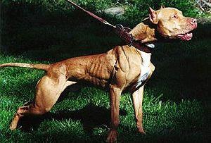 аллергия у собаки на гречку