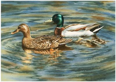 Painting Drake Mallard Decoys – How To : Duck Hunting Chat