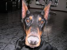 Fotografia vencedora na categoria ANIMAIS - Março 2009