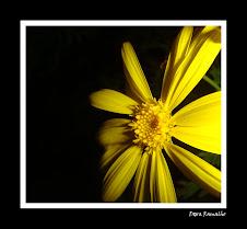 Fotografia vencedora na categoria FLORES - Abril 2009
