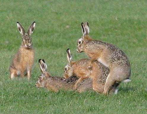 http://2.bp.blogspot.com/_bUh-1_QjMoM/TUbmm91-99I/AAAAAAAAADE/nzkTUCqXtAs/s1600/Rabbits.jpg