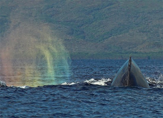 Whale in the Rainbow
