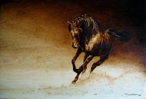 A Horse Off Course
