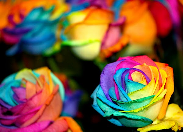 Rainbow Rose by Joshua Liberman