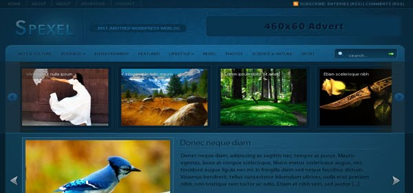 Spexel WordPress Theme