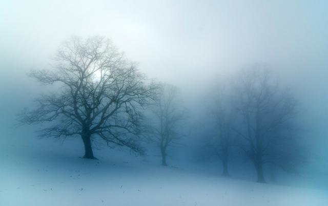 limetree in fog