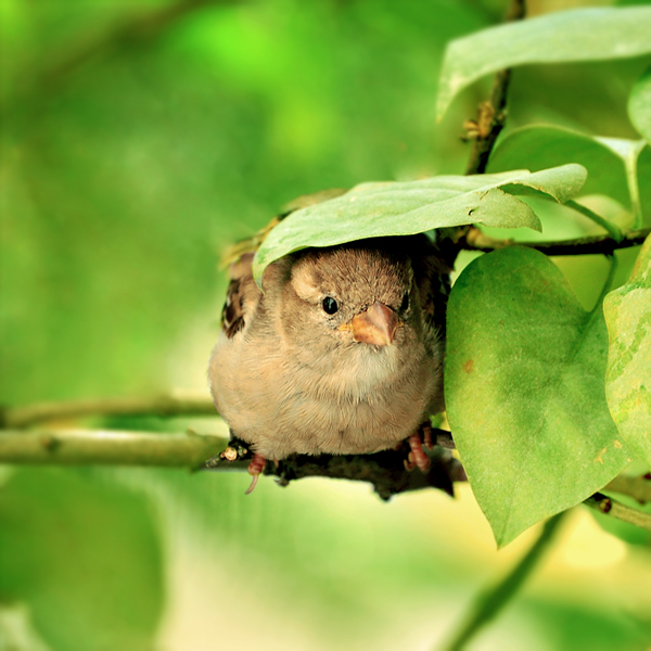 Shelter bird photography