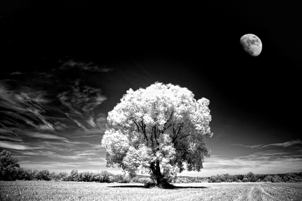 13 Digital Infrared Photography 25 Great IR Shots