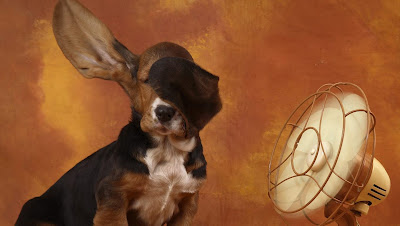 funny dogs: funny dogs wallpapers hound in fan