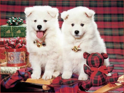 cute dog pictures, cute dogs twins