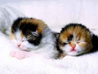 go to Cute Cat Pictures: Cats - Round Twins