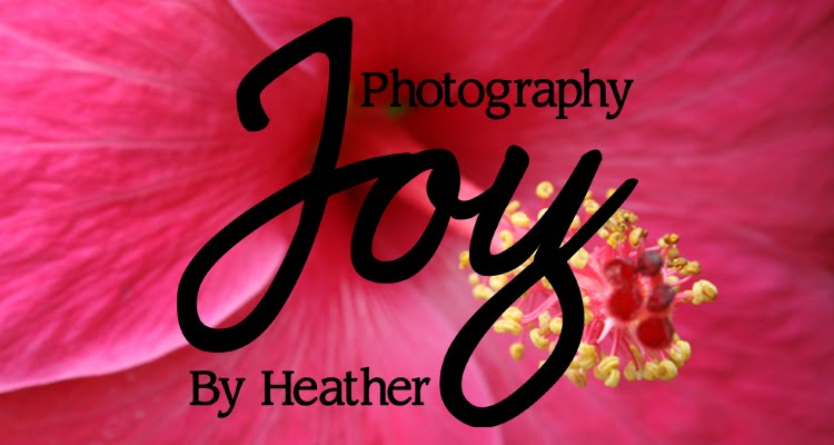 Joy Photography By Heather
