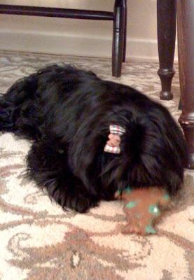 Groomingdales Dog Grooming Fairlight