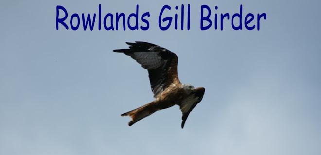Rowlands Gill Birder
