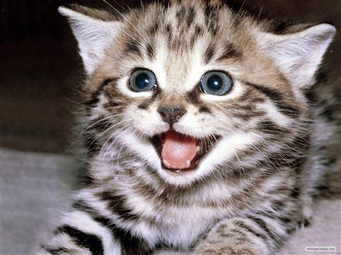 http://2.bp.blogspot.com/_bYK0eveCMGQ/TJnBZlH8NoI/AAAAAAAAAC0/GNqkC_eLdaE/s1600/kucing-imuts.jpg