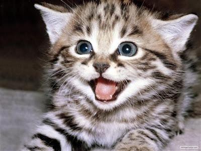 Jawaban Kenapa Kucing Menoleh Jika Di Panggil PUS