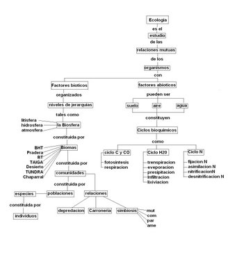 mapa conceptual ecología