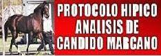 Protocolo Hipico