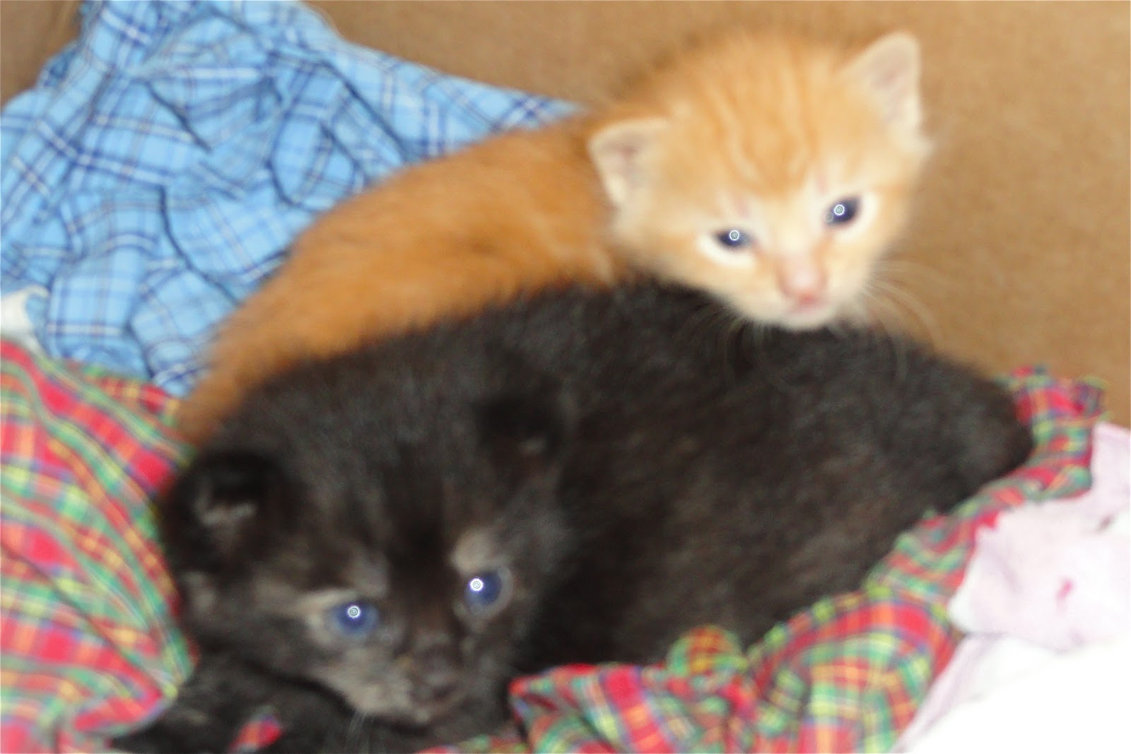 Image Gallery orange kitten names