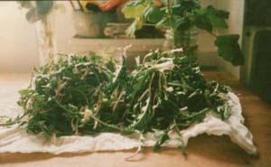 washed dandelion greens