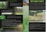 Wetland Flora -1